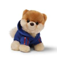 Boo-The World's Cutest Dog Itty Bitty Boo Jogging Suit