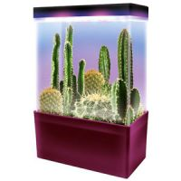 Light Cube Super LED Cactus Garden